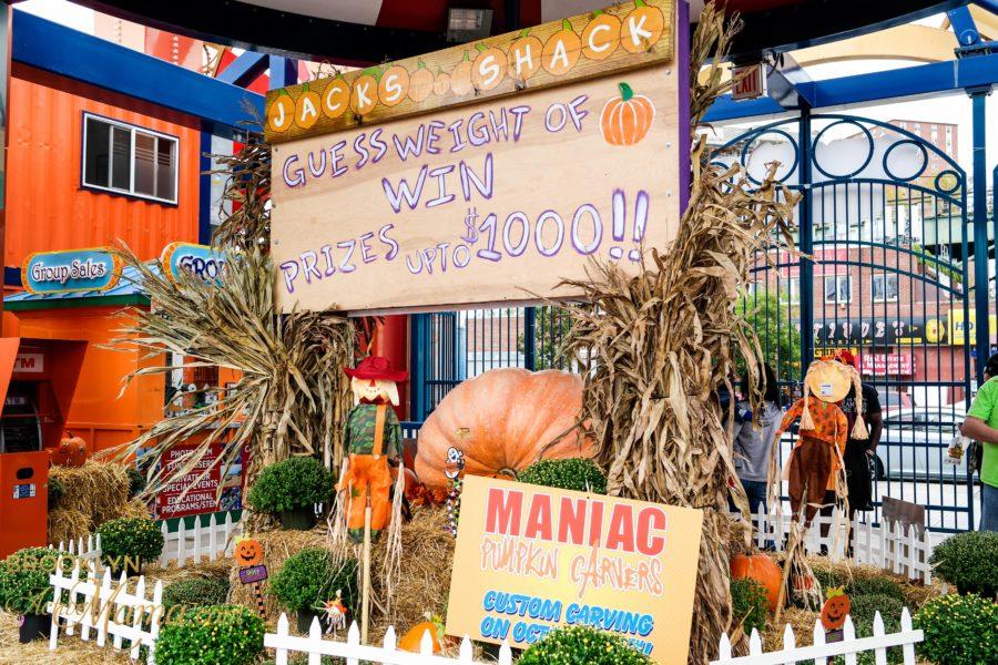halloween-harvest-3644
