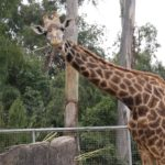 Traveling Solo: The San Diego Zoo